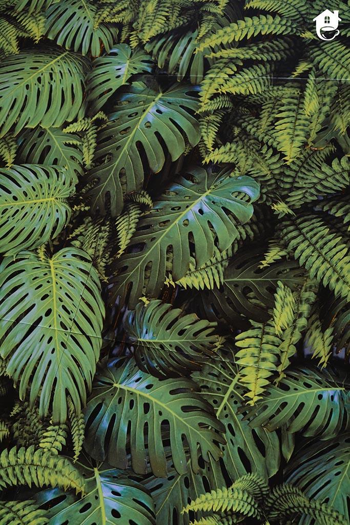 płytki w zielone liście monstery